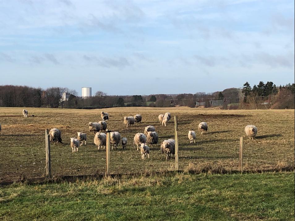 Hammersholt Enges store grønne udearealer udlånes til hobby dyrehold/-avl og en nyligt plantet plantage. Koncept for Hammersholt Enge.